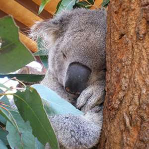 Taronga Zoo - Nura Diya Aboriginal Discovery