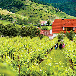 Guided Hike through the Austrian Vineyards