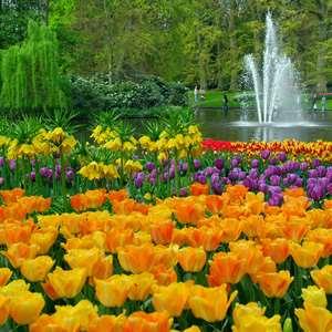 Keukenhof Gardens Visit