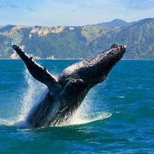 Hermanus Whale Watching (Private)
