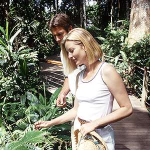 Daintree Rainforest 4WD Tour