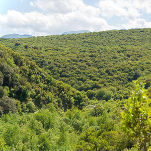 Hit the Trail: Hike in the Greek Countryside