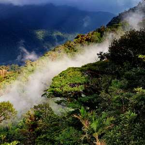 Santa Elena Cloud Forest Reserve Hike