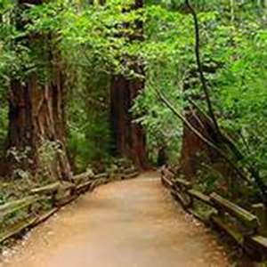 Muir Woods and Sausalito