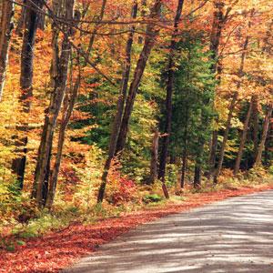 Classic Fall Foliage (AB)
