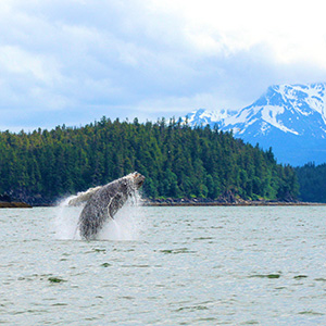 Seattle, Victoria & Vancouver With Alaska Cruise (CMI)