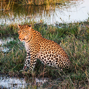 South African Sojourn with Chobe National Park & Victoria Falls