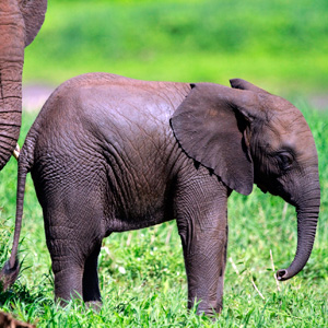 Tanzania Private Safari (IQT)