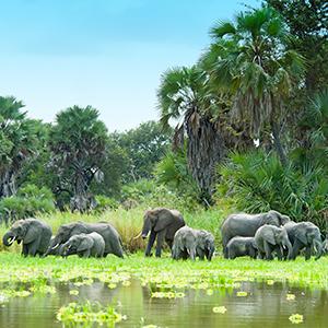Tanzania Private Safari with Selous Game Reserve