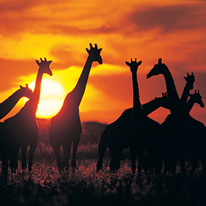 Wilds Of Botswana & Victoria Falls (IQZ)