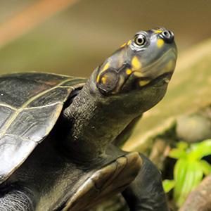 Ecuador Discovery With Ecuador's Amazon & The Finch Bay In The Galápagos (ISEJ)