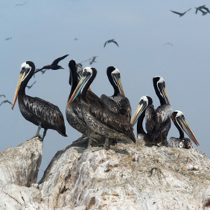 Journey Through The Andes With Peru's Amazon & The Finch Bay In The Galápagos (ISNJ)