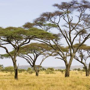 Kenya: A Classic Safari (QK)