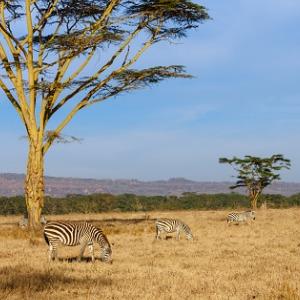 KENYA: A CLASSIC SAFARI WITH AMBOSELI (QKE)