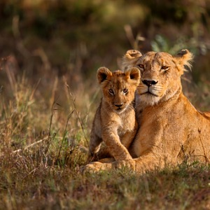 Tanzania: The Serengeti & Beyond With Serengeti Extended Stay (QZE3)