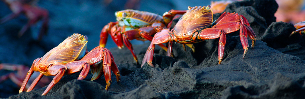 Save $1000 per couple on select departures of Avalon Discover the Galapagos & Peru (WGG)*